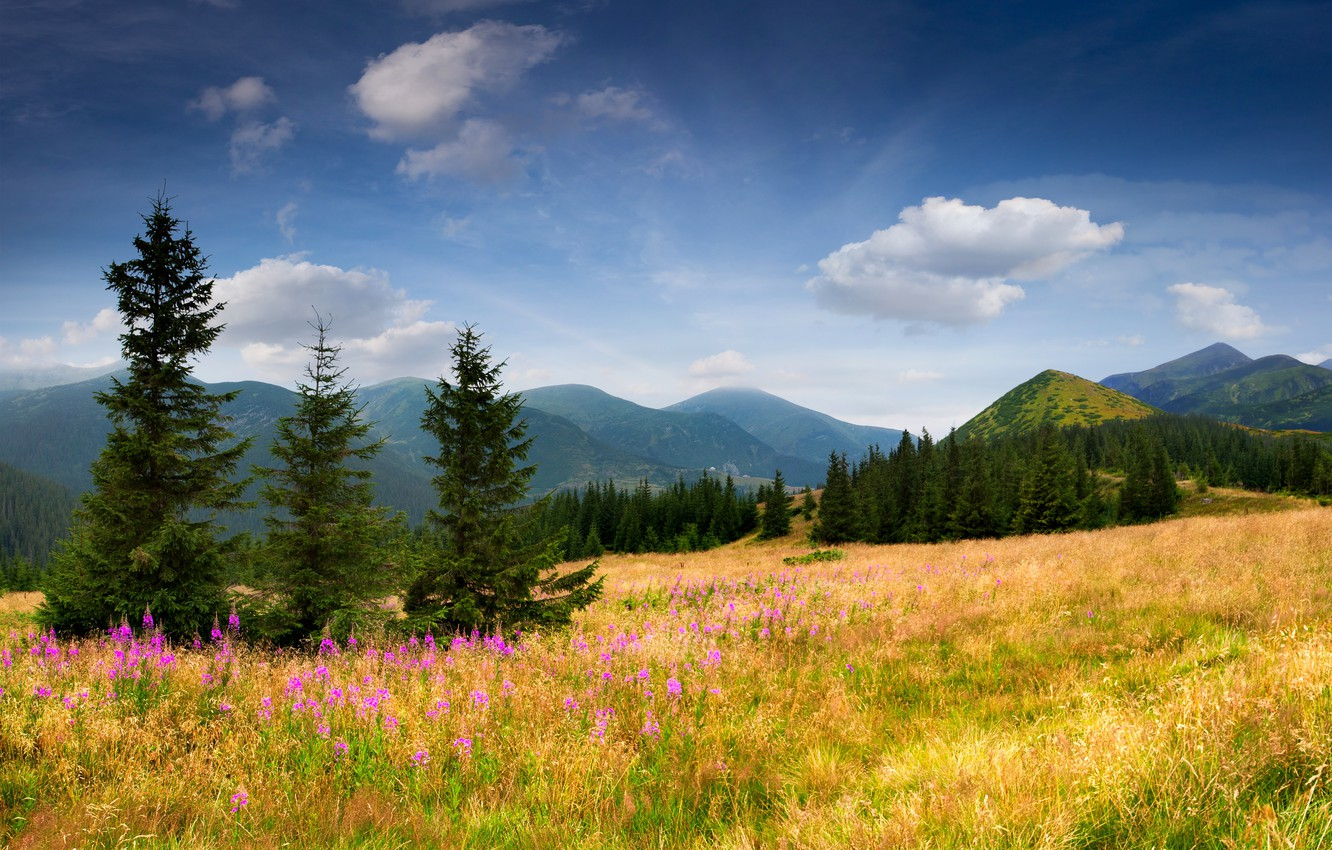 Photo wallpaper field, the sky, grass, clouds, trees, flowers, mountains, nature, tree, ate, slope