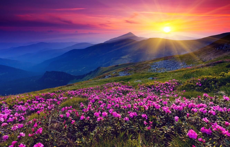 Photo wallpaper the sun, flowers, mountains, dawn