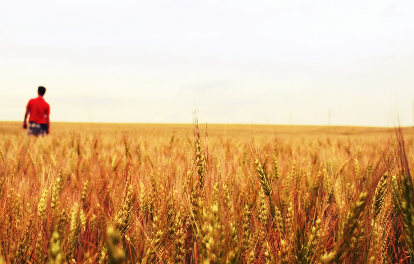 Photo wallpaper wheat, field, white, leaves, water, drops, macro, green, Rosa, background, green, widescreen, Wallpaper, people, plant, …