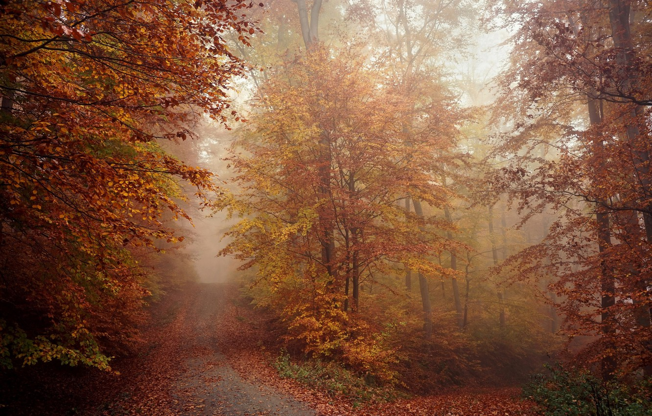Photo wallpaper road, autumn, forest, nature, fog, morning