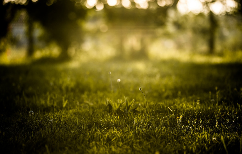 Photo wallpaper summer, grass, nature, bokeh