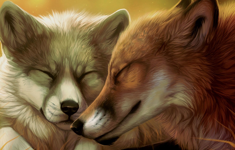 Photo wallpaper pair, Fox, faces