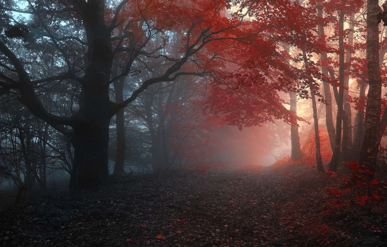 Photo wallpaper road, autumn, forest, leaves, trees, fog