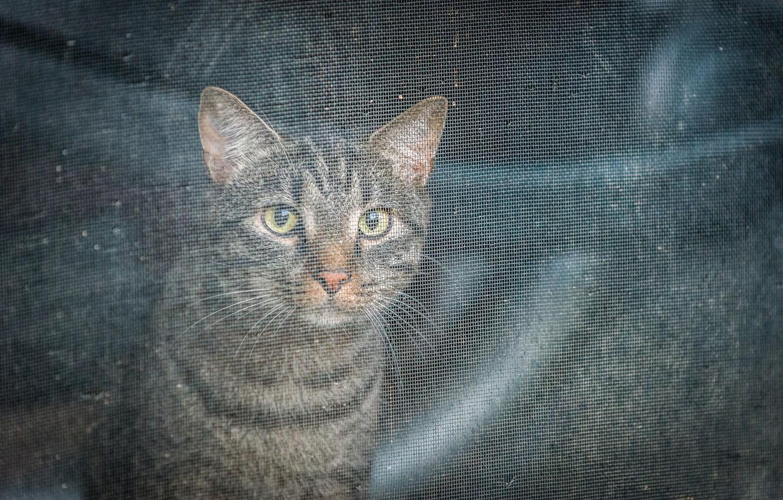 Photo wallpaper eyes, look, mesh, Koshak, Tomcat