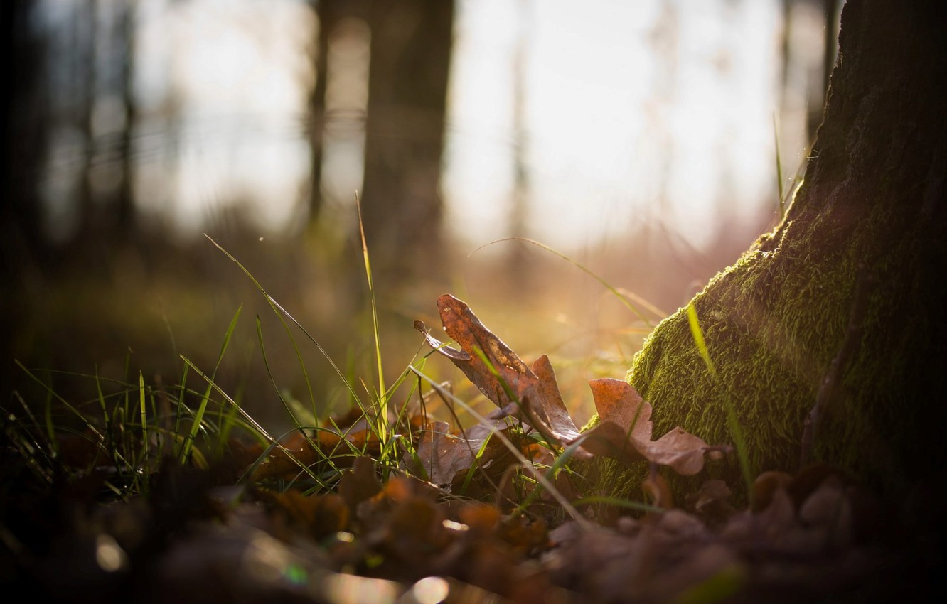 Photo wallpaper autumn, forest, grass, leaves, macro, nature, photo, background, tree, Wallpaper, moss, plants, wallpapers