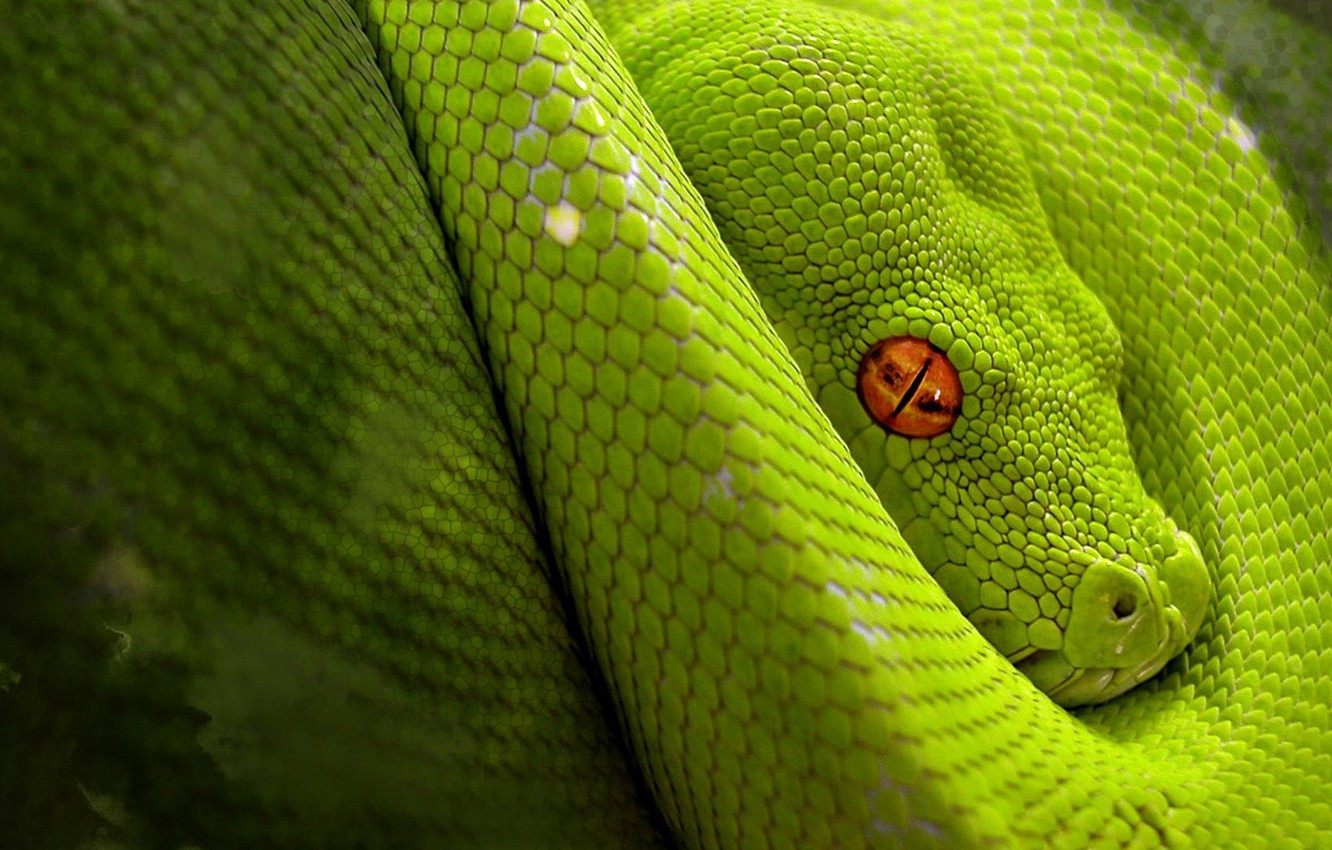 Photo wallpaper snake, Green, jungle, reptile, camouflage