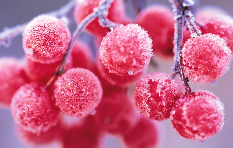Photo wallpaper frost, berries, branch, Rowan