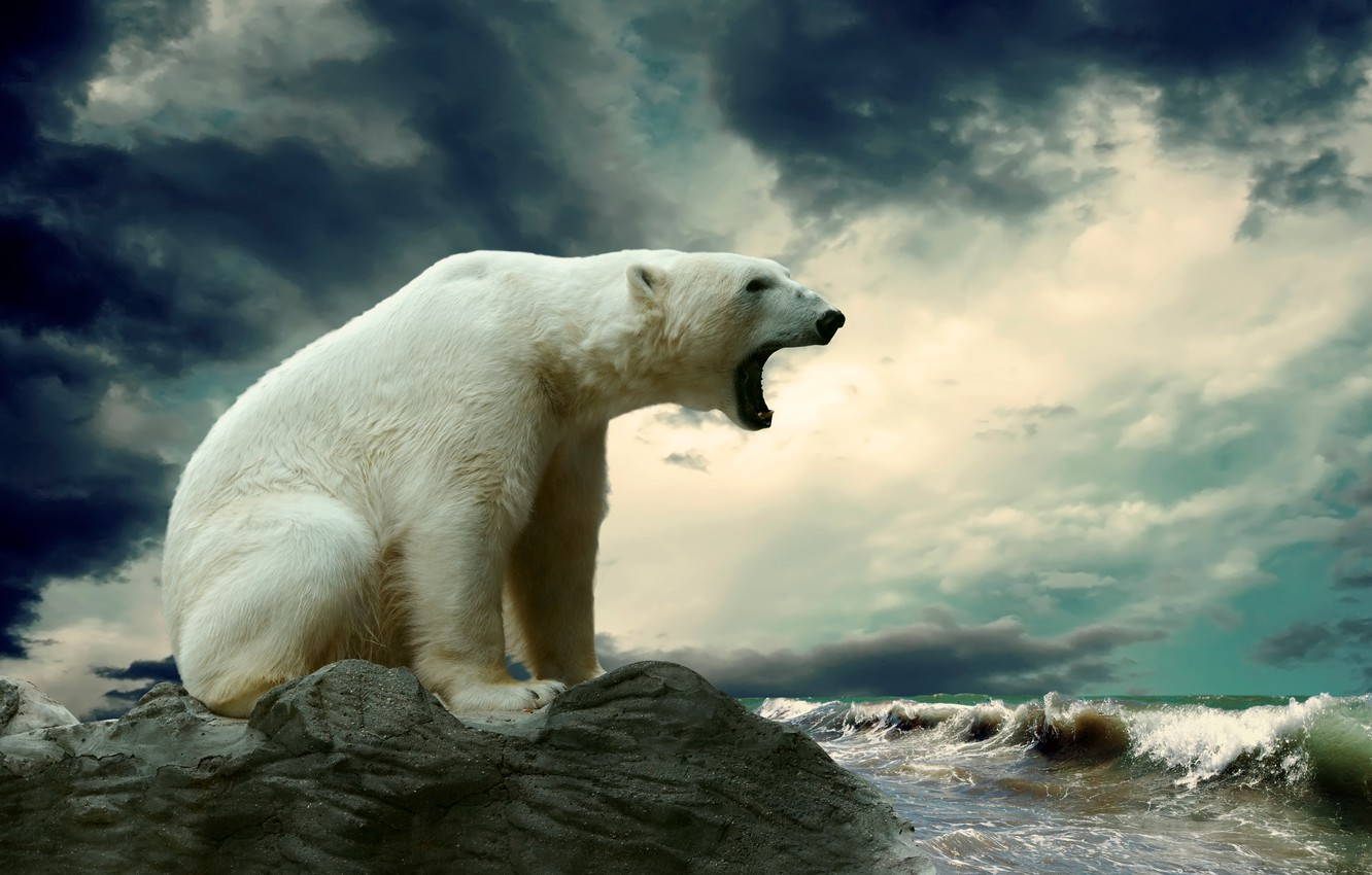 Wallpaper Sea Wave Stone Polar Bear Images For Desktop Section