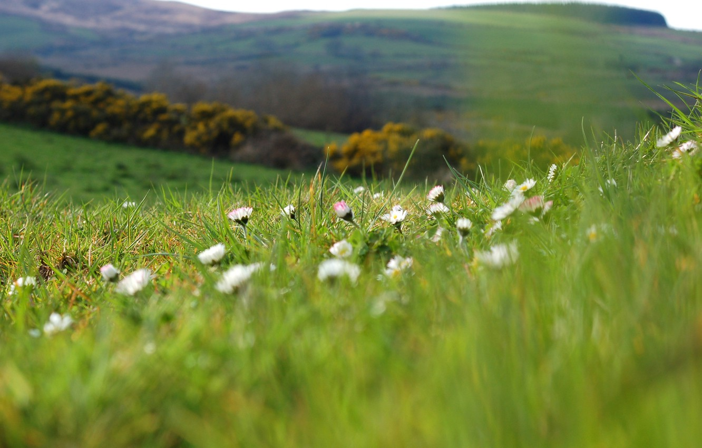 Photo wallpaper greens, field, summer, grass, macro, flowers, nature, hills, glade, chamomile, plants, spring, blur