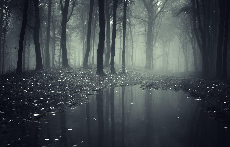 Photo wallpaper leaves, trees, landscape, nature, road, lake, forest, misty, forest, trees, deep, landscape, nature, leaves, woods, …