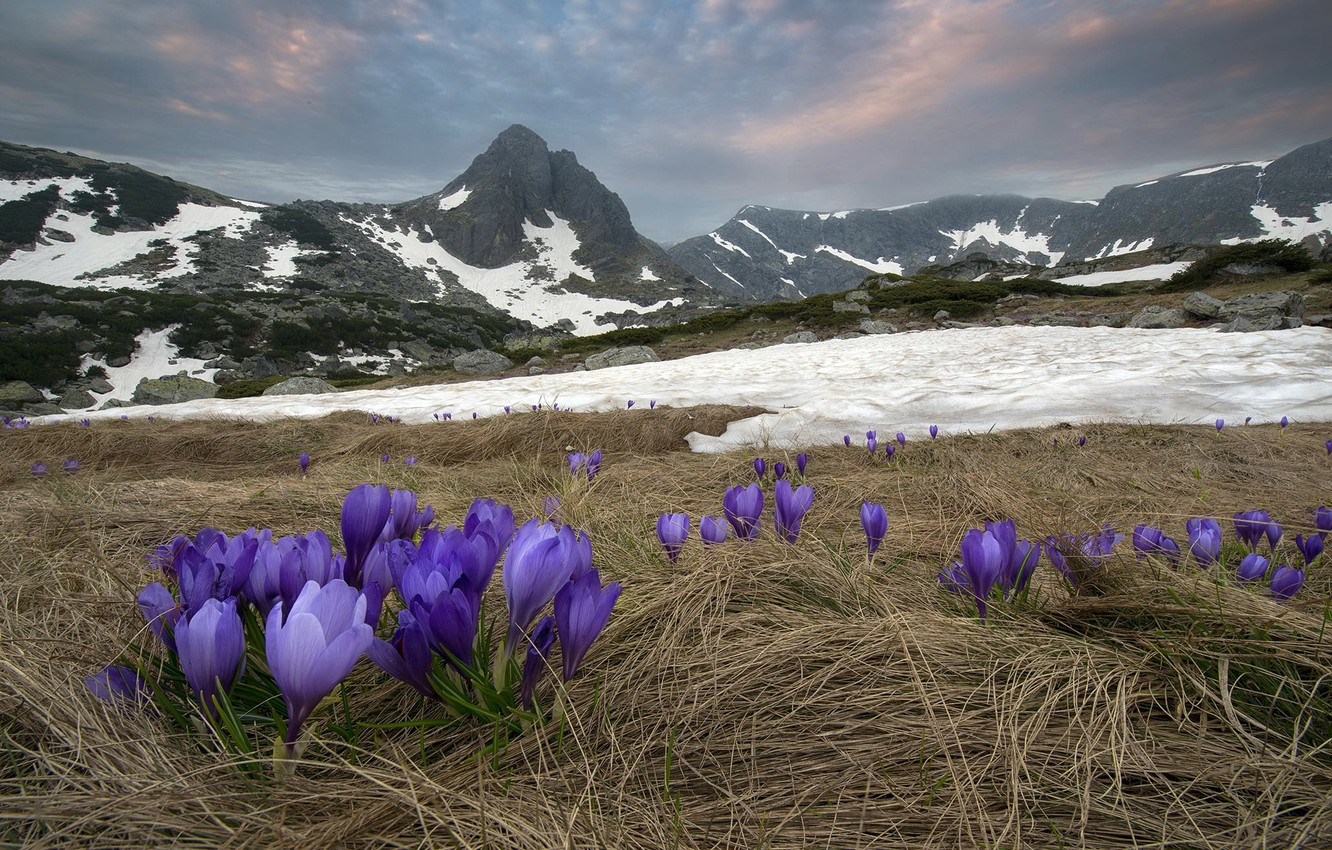 Photo wallpaper flowers, mountains, nature