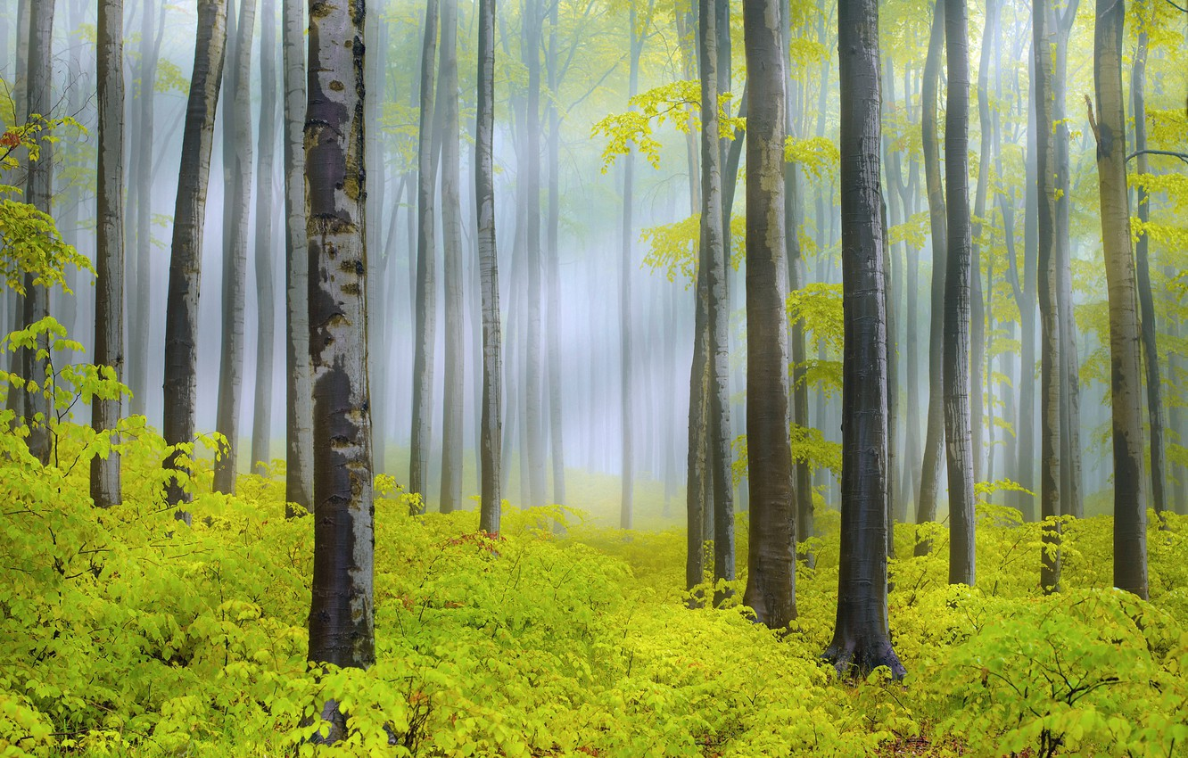 Photo wallpaper forest, light, trees, nature, spring, haze