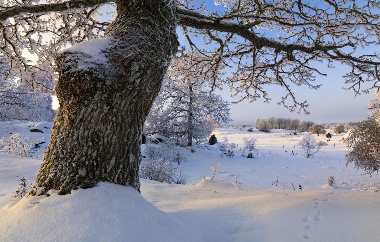 Photo wallpaper winter, snow, trees, Sweden, Sweden, Sodermanland, Vagnhärad