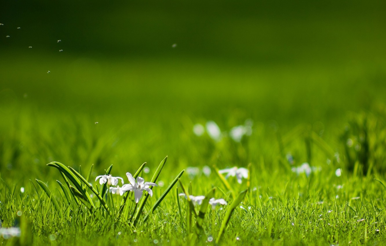 Photo wallpaper field, grass, leaves, petals, blur, white, fuzzes, wildflowers