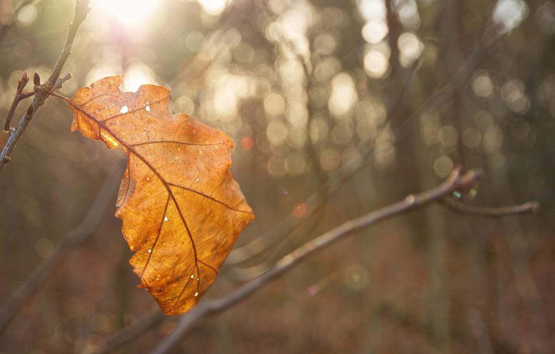 Photo wallpaper autumn, the sun, macro, light, sheet, glare, yellow, blur