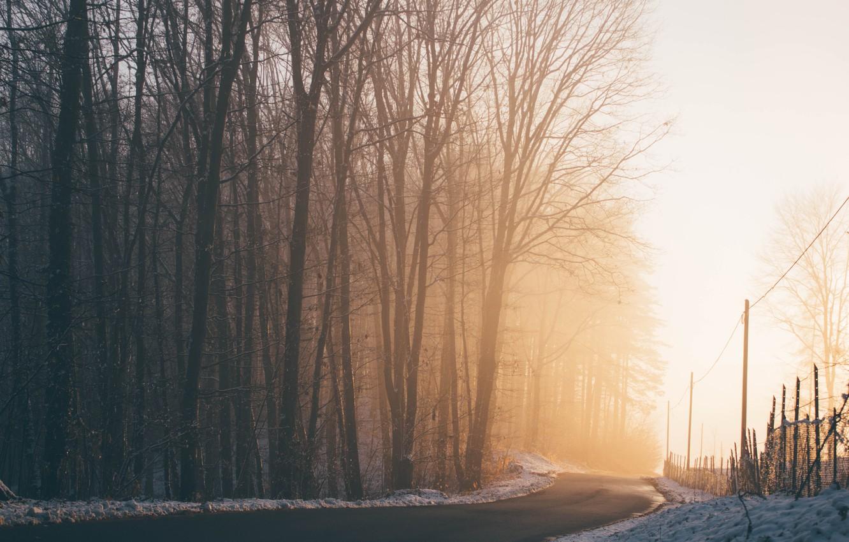 Photo wallpaper winter, road, light, snow, trees, nature