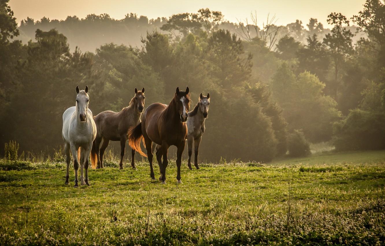 Photo wallpaper field, nature, horses