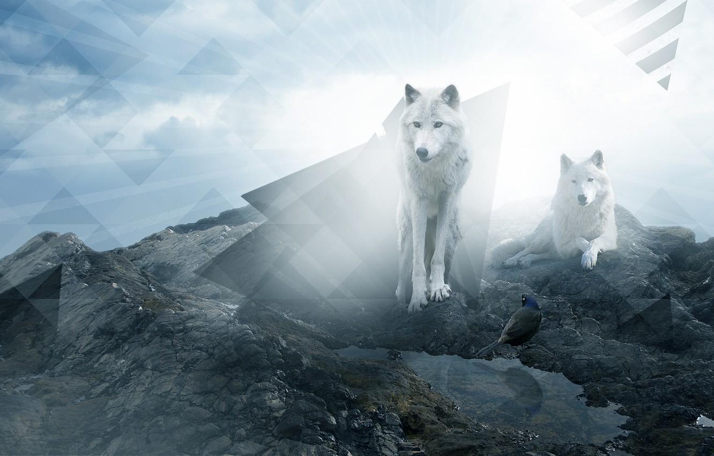 Photo wallpaper rock, stones, wolf, triangle