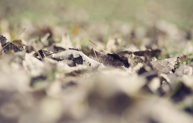 Photo wallpaper leaves, dry, fallen, bokeh