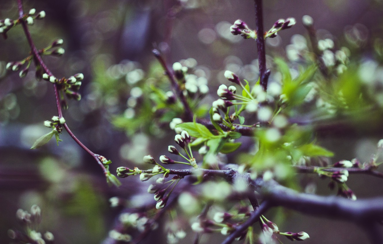 Photo wallpaper trees, flowers, nature, spring