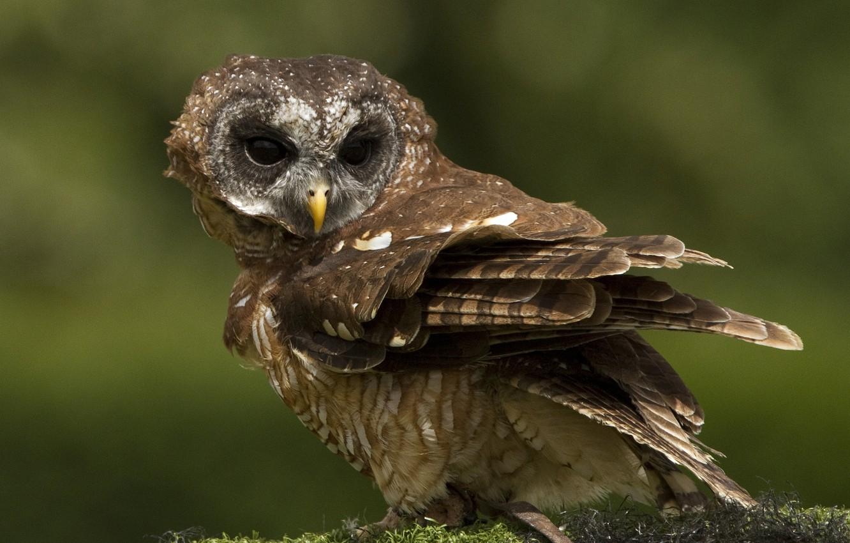 Photo wallpaper background, owl, bird, moss
