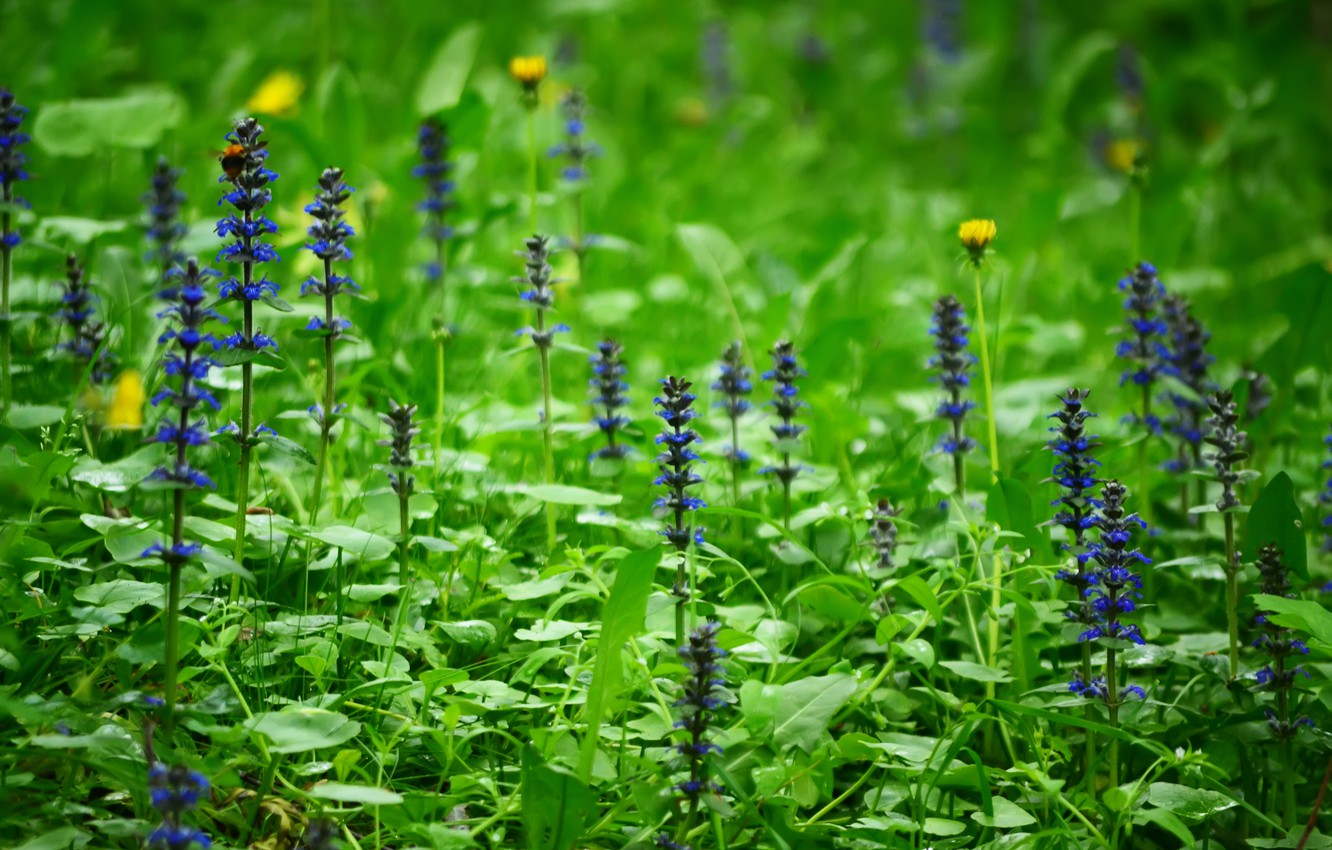Photo wallpaper forest, grass, flowers, nature, glade, plants, spring, Russia