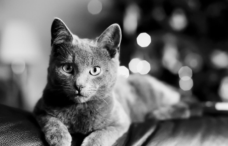 Wallpaper Cat Cat Look Black And White Lies Cat