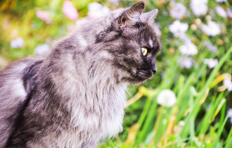 Photo wallpaper greens, animals, summer, cats, cute, beautiful, summer, bright, photo, cat, animal, nice