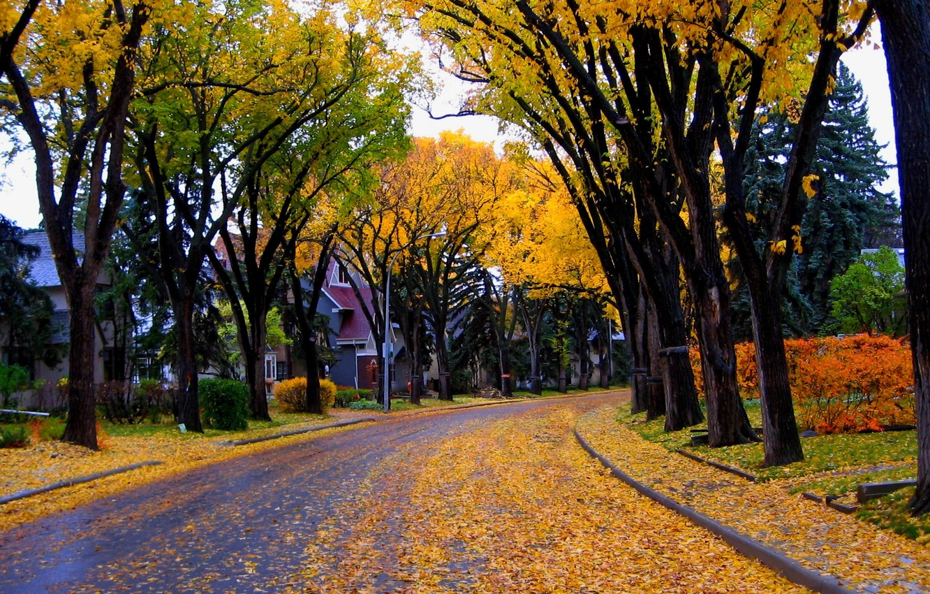 Photo wallpaper autumn, leaves, trees, nature, city, the city, house, street, house, architecture, trees, nature, autumn, leaves, …