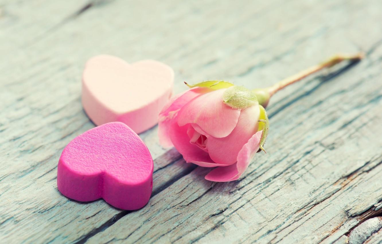 Photo wallpaper flower, background, tree, pink, widescreen, Wallpaper, mood, heart, rose, petals, wallpaper, bark, heart, widescreen, background, …