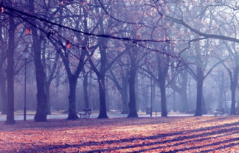 Photo wallpaper autumn, the city, Park