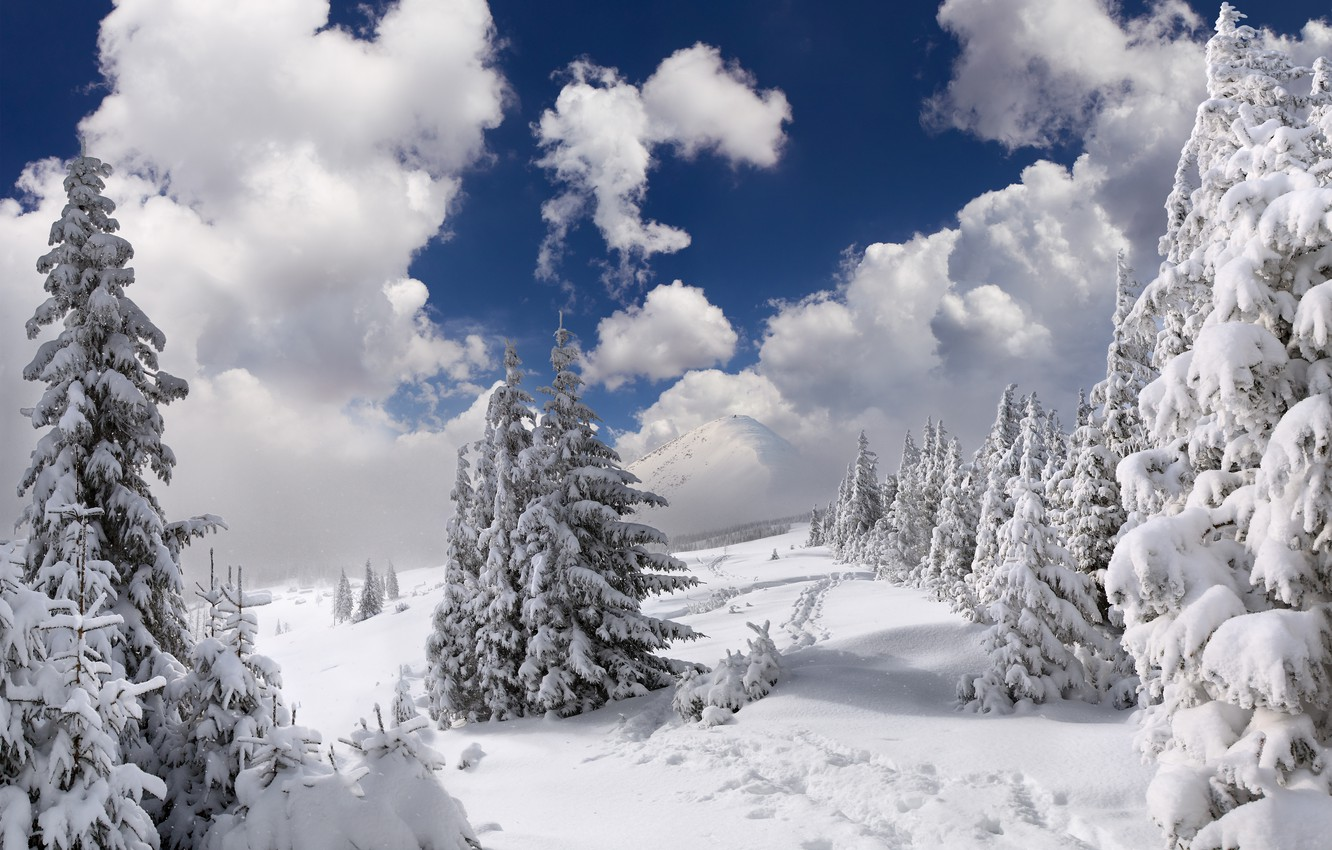 Photo wallpaper winter, forest, the sky, clouds, snow, trees, landscape, mountains, nature