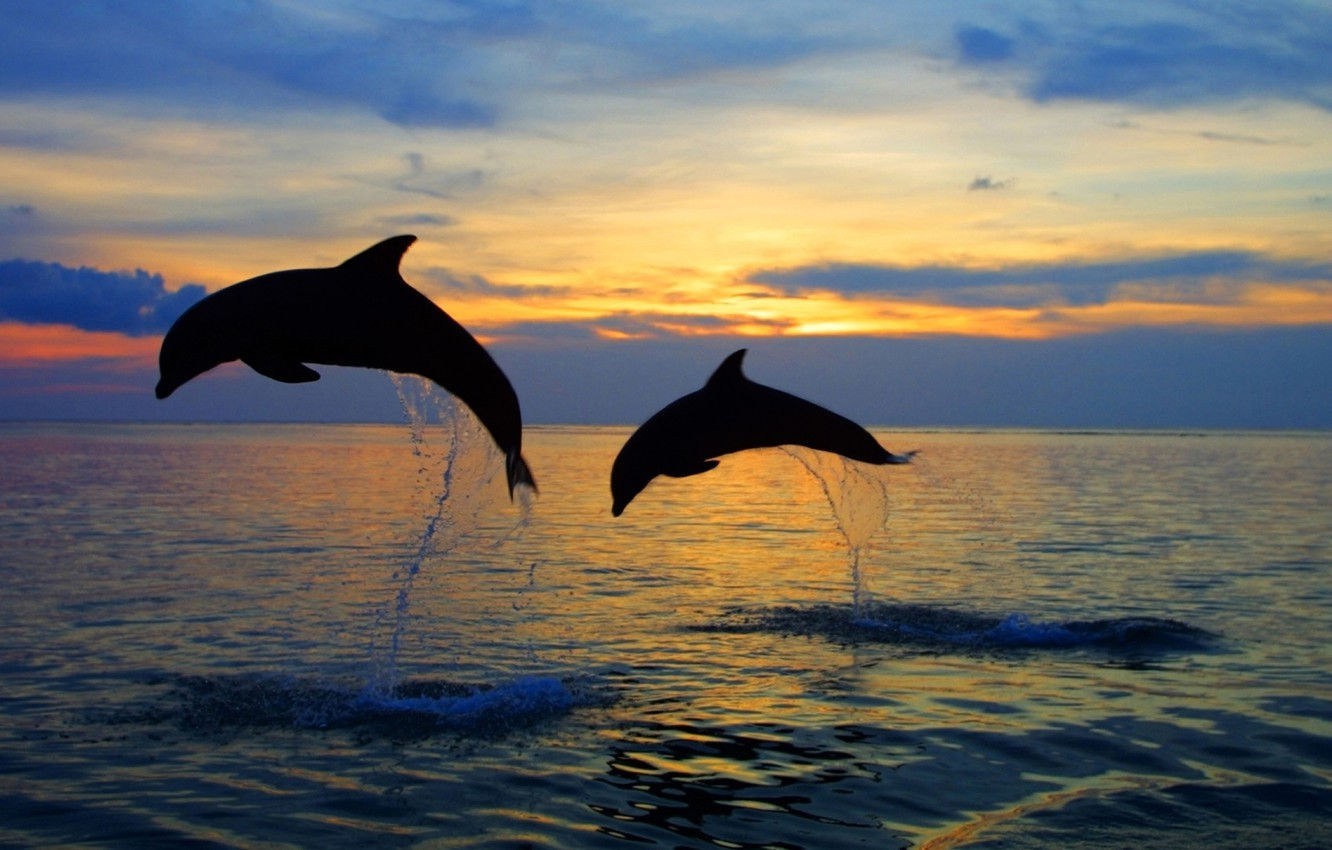 Photo wallpaper sea, the sky, water, sunset, squirt, nature, jump, the evening, horizon, silhouette, pair, dolphins, nature, …