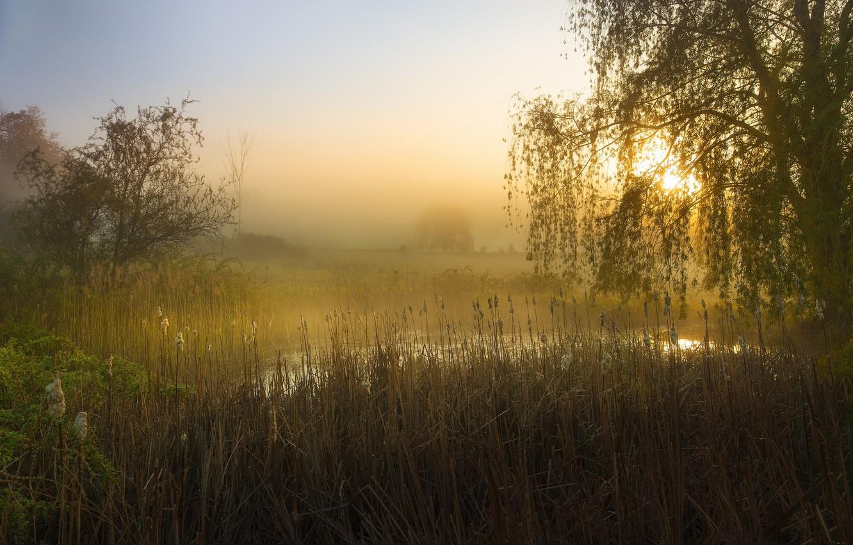 Photo wallpaper trees, fog, pond, morning, reed