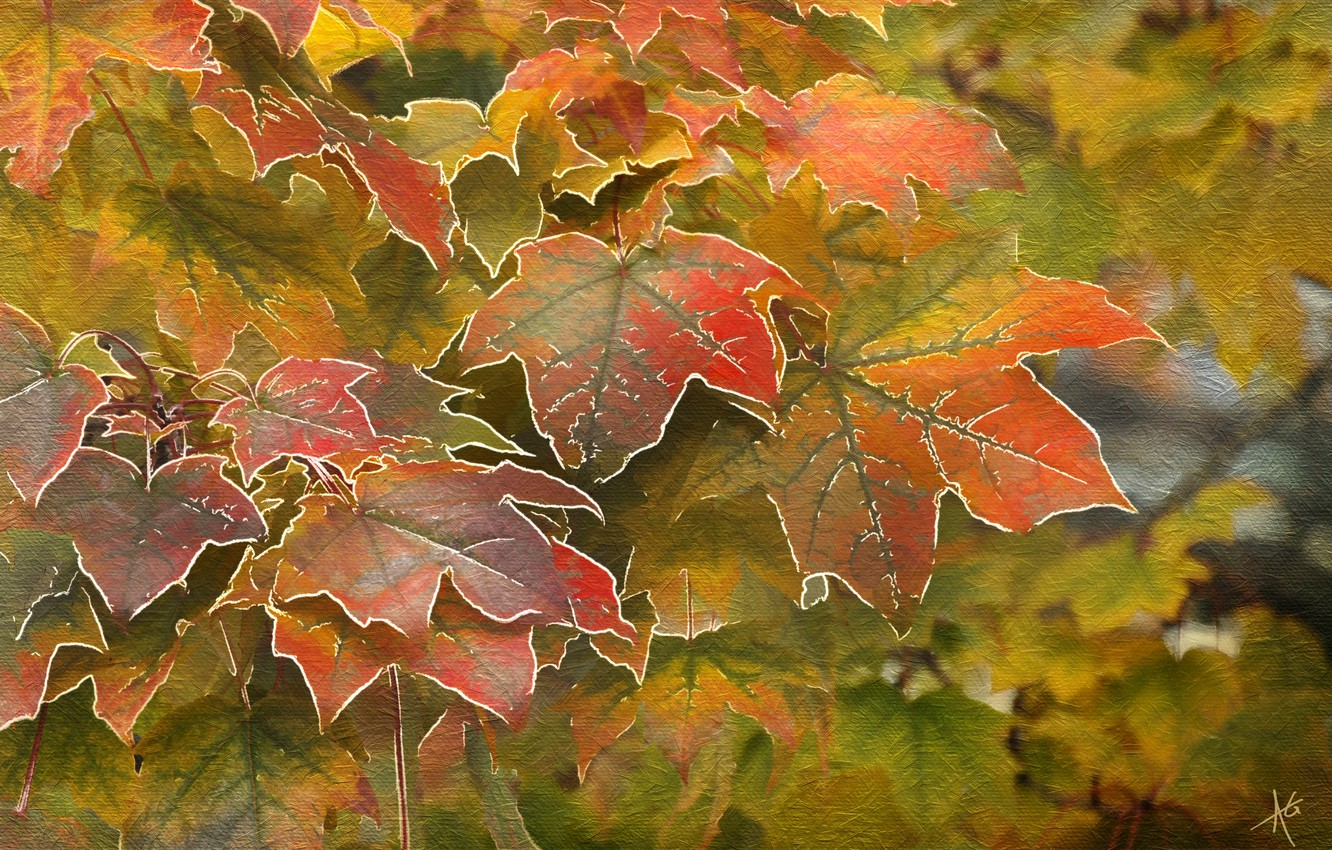 Photo wallpaper autumn, leaves, maple