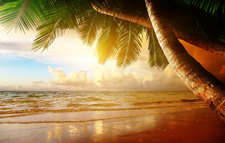 Photo wallpaper sand, sea, beach, sunset, tropics, palm trees, shore, summer, beach, sea, ocean, coast, sunset, sand, ...
