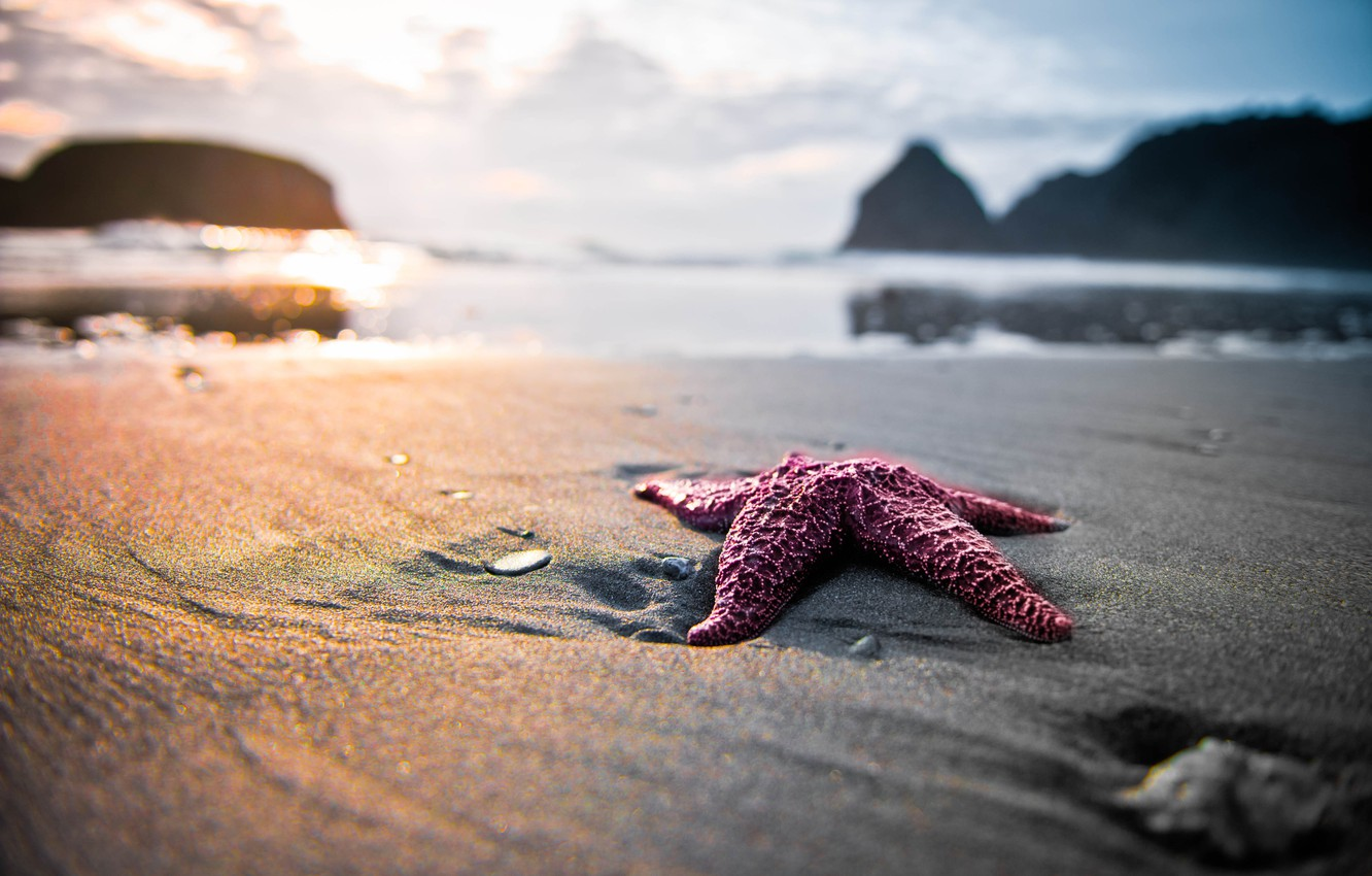 Photo wallpaper sand, beach, nature, star