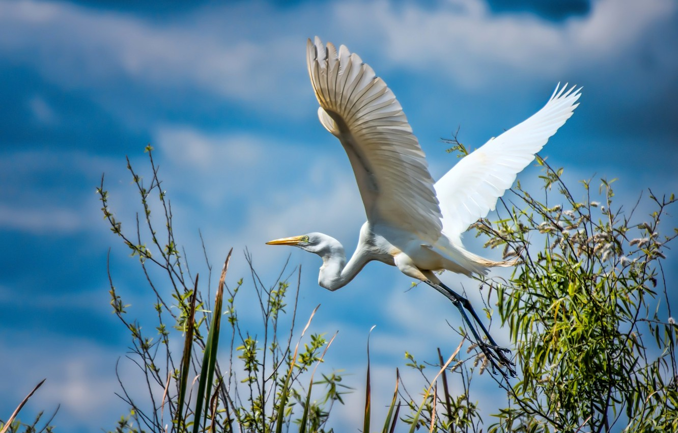 Photo wallpaper The SKY, WINGS, WHITE, BIRD, STORK, HERON
