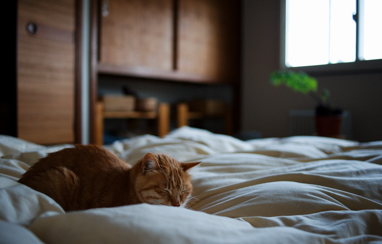 Photo wallpaper cat, bed, red, sleeping
