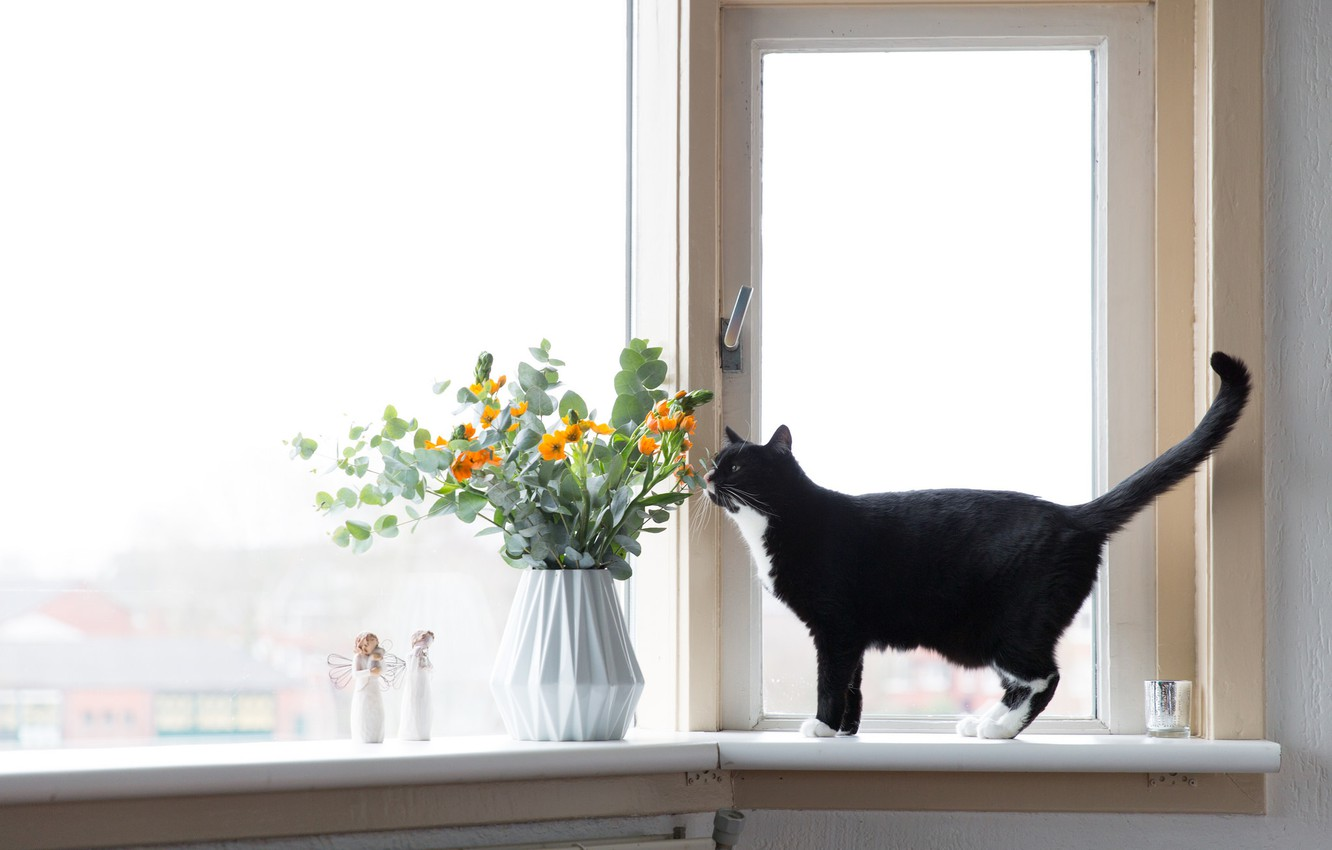 Photo wallpaper cat, flowers, window