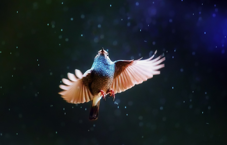 Photo wallpaper rain, bird, wings