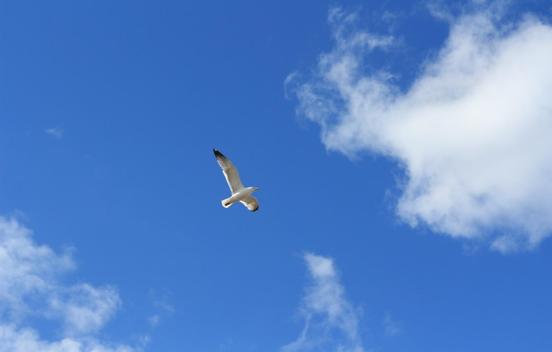 Photo wallpaper the sky, freedom, flight, bird