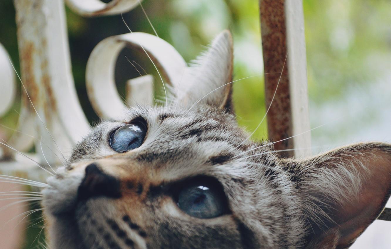 Photo wallpaper cat, eyes, cat, wool, looks