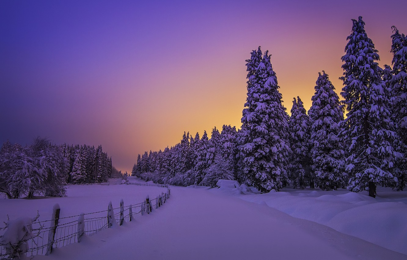 Photo wallpaper winter, forest, snow, trees, sunset, ate, the snow, Spain, Spain, Biscay, Basque Country, Basque Country, …
