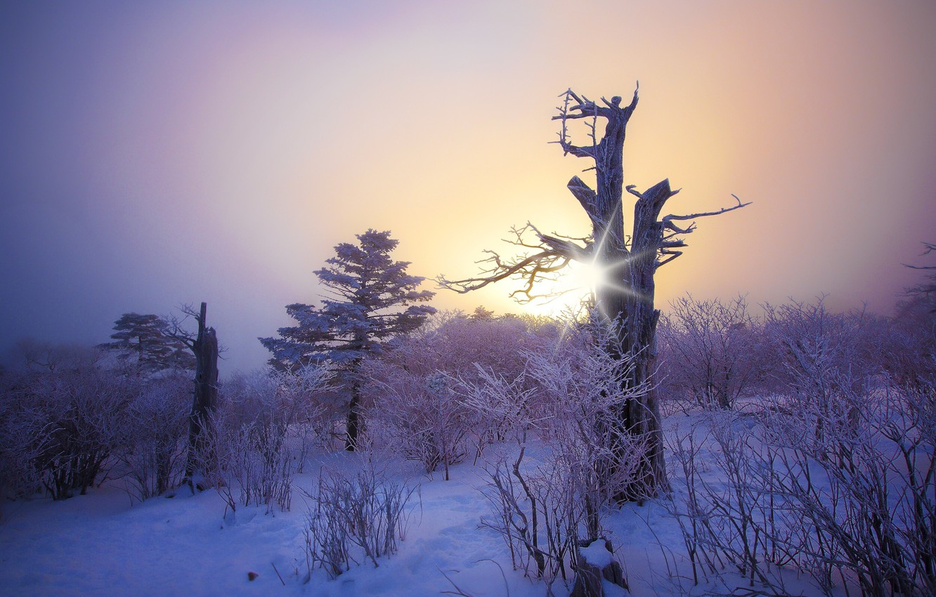 Photo wallpaper frost, forest, the sun, snow, trees, sunset, tree, Winter, beauty, frost, snag, forest, twilight, twilight, …