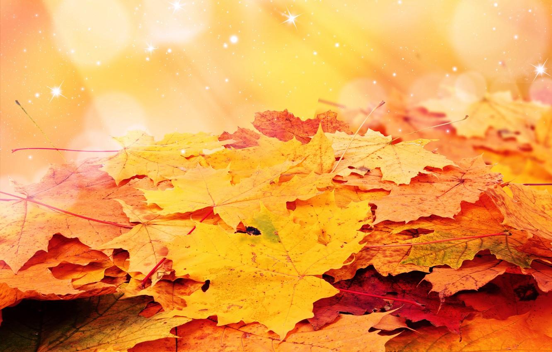 Photo wallpaper autumn, leaves, stars, heap