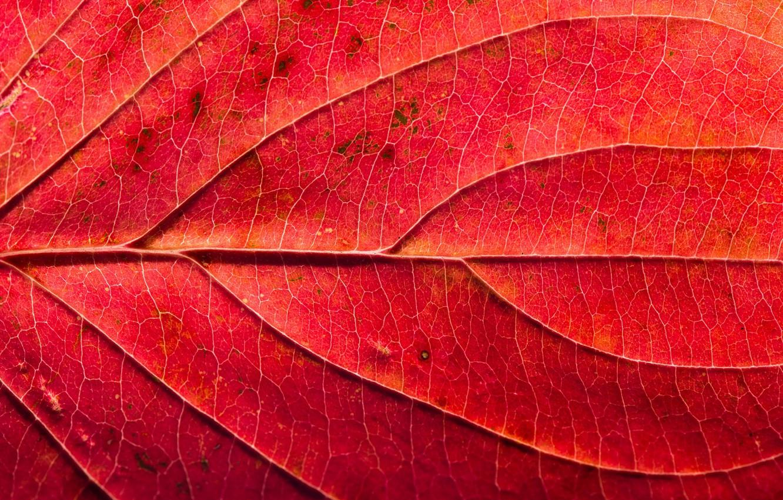 Photo wallpaper macro, sheet, texture