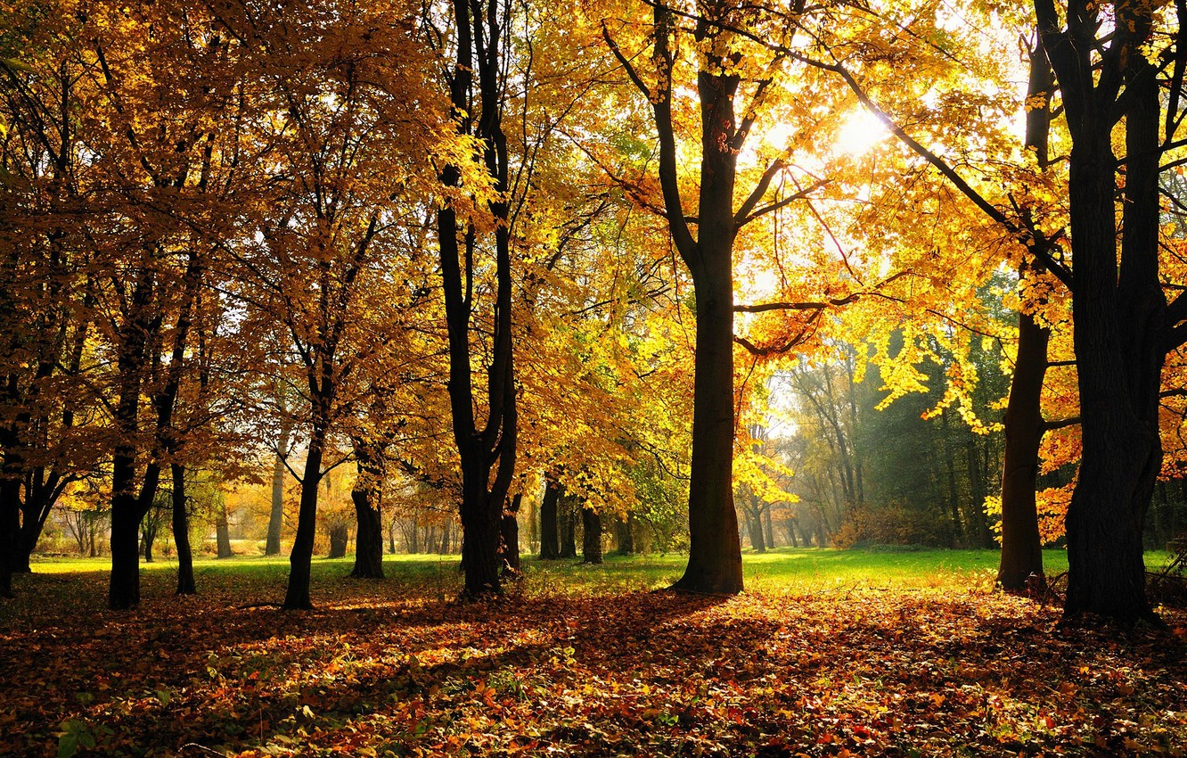 Photo wallpaper autumn, forest, grass, trees, Park, foliage