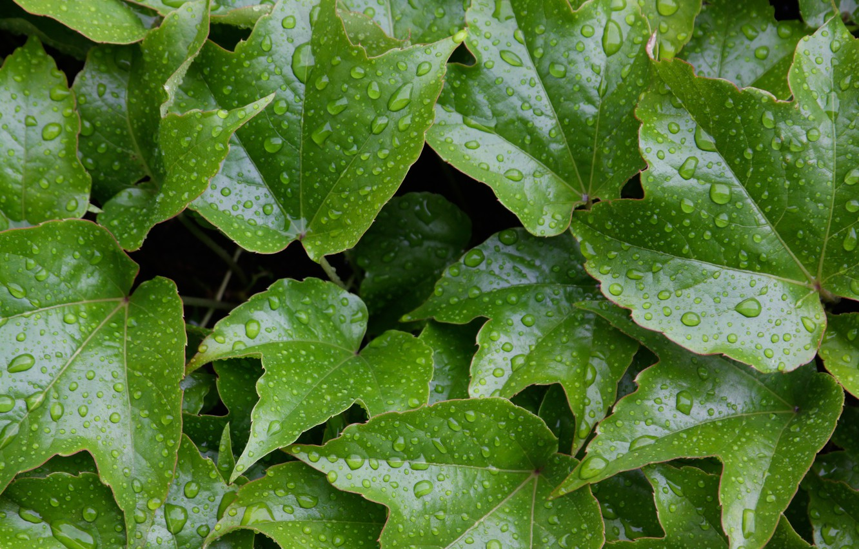 Photo wallpaper wet, water, leaves