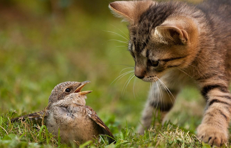 Photo wallpaper cat, grass, cat, nature, kitty, bird, hunting, instinct